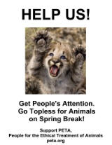 Cougar kitten topless for animals poster